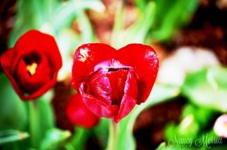cffc_redflowers_nmp